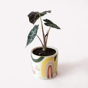 Happimess x JASA - Ceramic Pot 10x10 cm