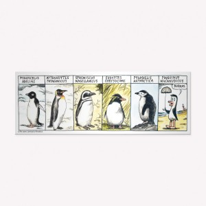 Penguin Races Magnetic Comic